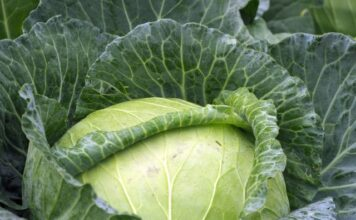 How to cook cabbage?